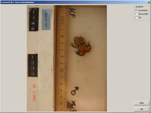 Ventral pattern of fire-bellied toad for storing health status of amphibian.