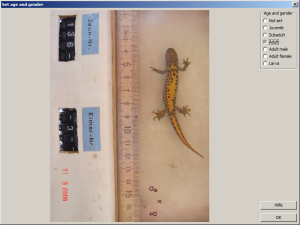 Ventral pattern of crested newt for storing gender of individual.