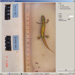Ventral pattern of crested newt for storing length of individual.