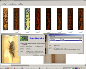 Automatic photo-identification and pattern matching software for Amphibians