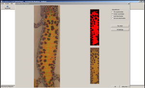 Ventral spot pattern of amphibian crested newt for automatic photo-identification.