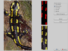 Dorsal pattern of Fire salamander for automatic pattern matching and individual recognition.