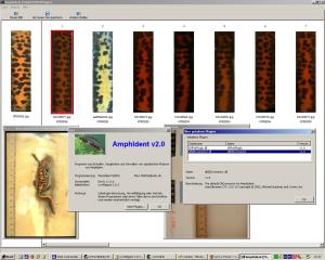 Software zur automatischen individuellen Identifizierung von Fleckenmustern von Amphibien.