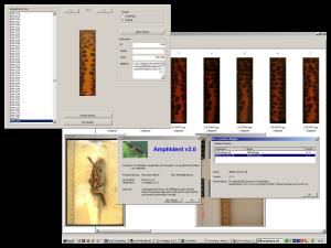 Automatische Photo-Identifikation von Amphibien.